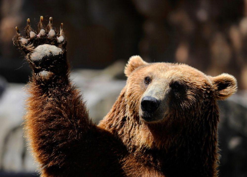 bearsbeat.jpg