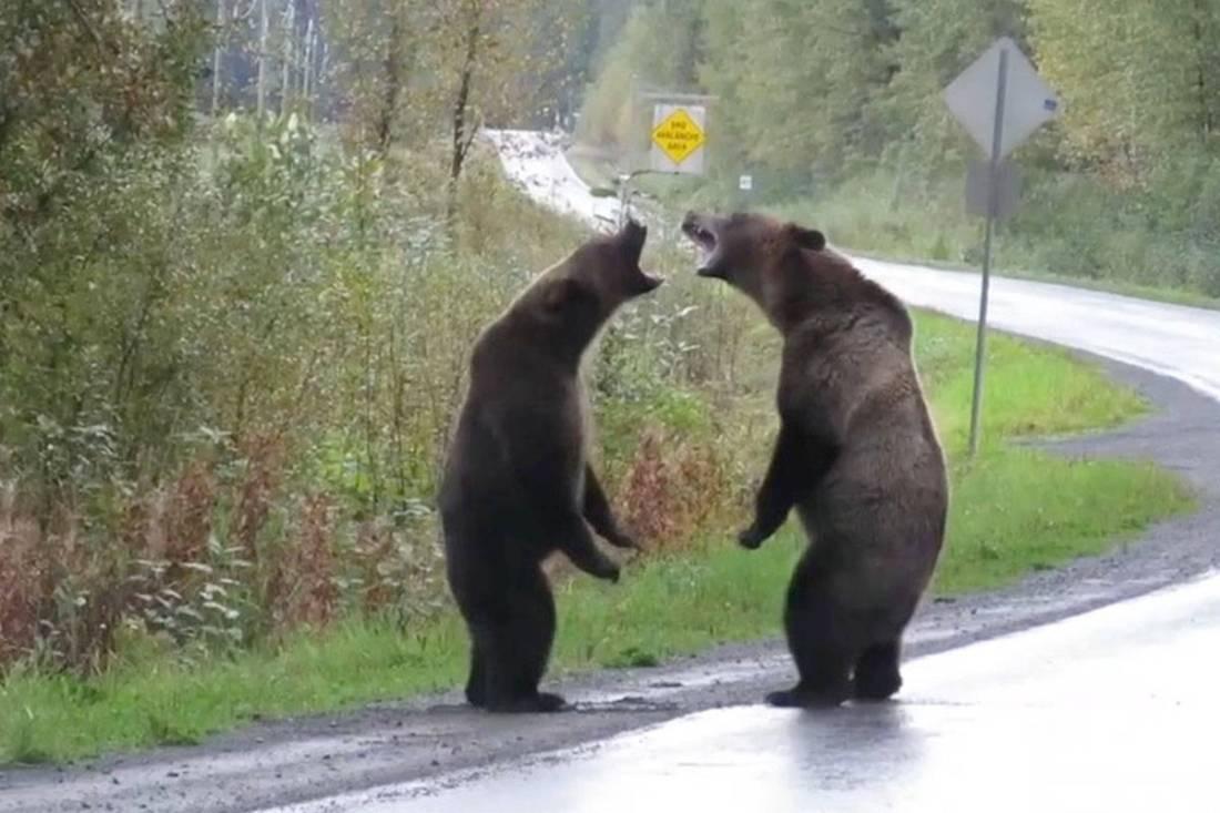 18625085_web1_bears-stewart1.jpg